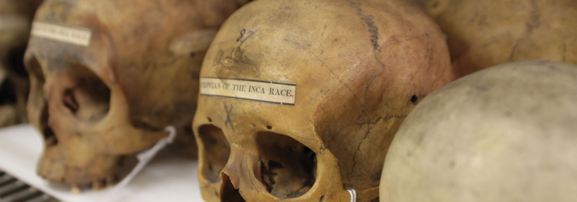 Physical Anthropology Section at the Penn Museum