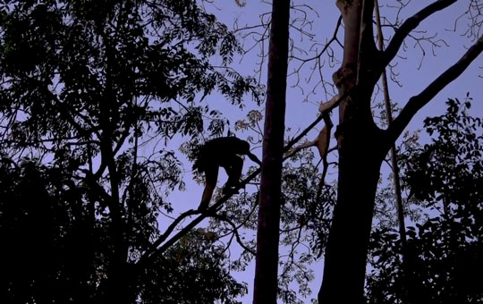 A man climbing a tree branch high in the sky.