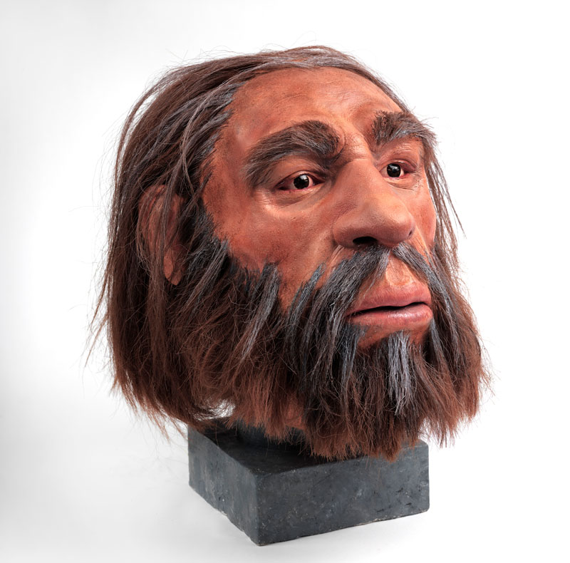 reconstruction of a neanderthal head