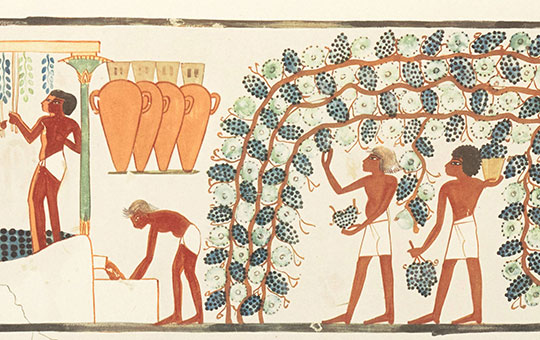 ancient depiction of winemaking